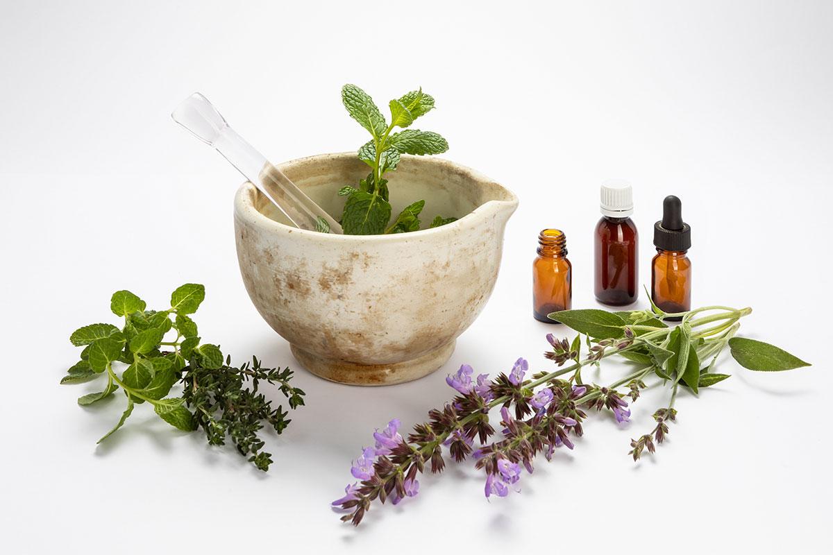 bodegón de plantas medicinales